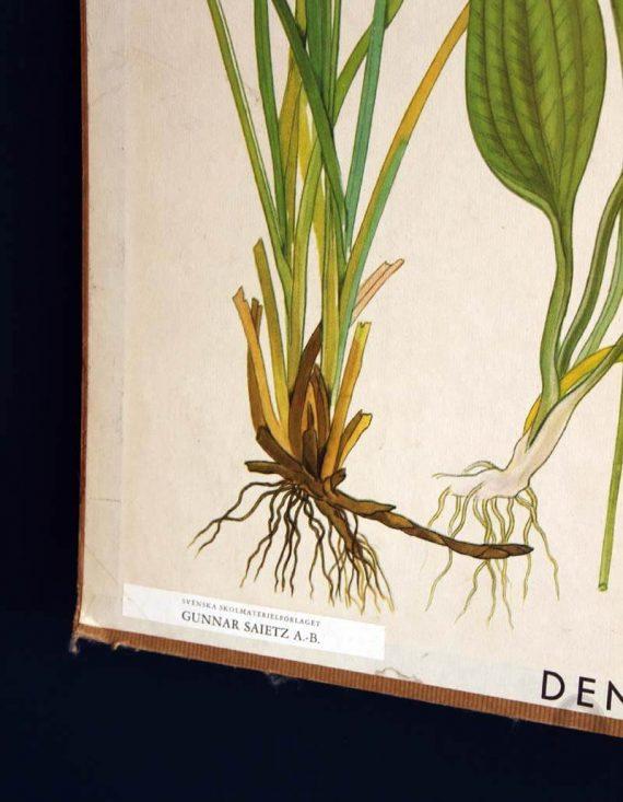 vintage schoolplaat zweeds detail gunnar saietz